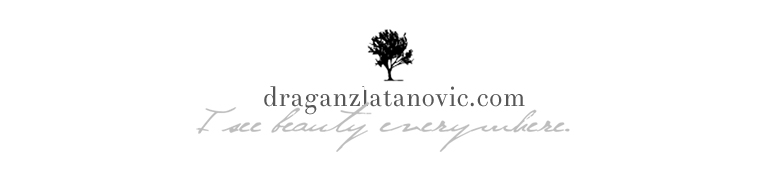 Dragan Zlatanovic Wedding Photographer | Treviso Venice Tuscany logo